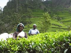 MOJO Visit - Lipton's Tea Estate (AOyler) Tags: smile srilanka hillcountry lipton teaestate haputale teapickers