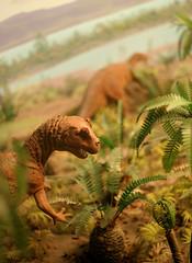 Dino Diorama (Aaron Webb) Tags: washingtondc smithsonian dc dinosaur diorama smithsoniannaturalhistorymuseum