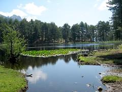 Lac de Crenu et ses nénuphars (2006)
