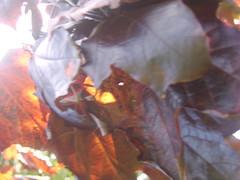 Ra (CMYK2007) Tags: light black 1 still fast rage sharp r hollow