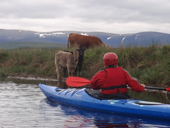 Touring kayaking on the River Spey with Full On Adventure, The Highlands of Scotland.