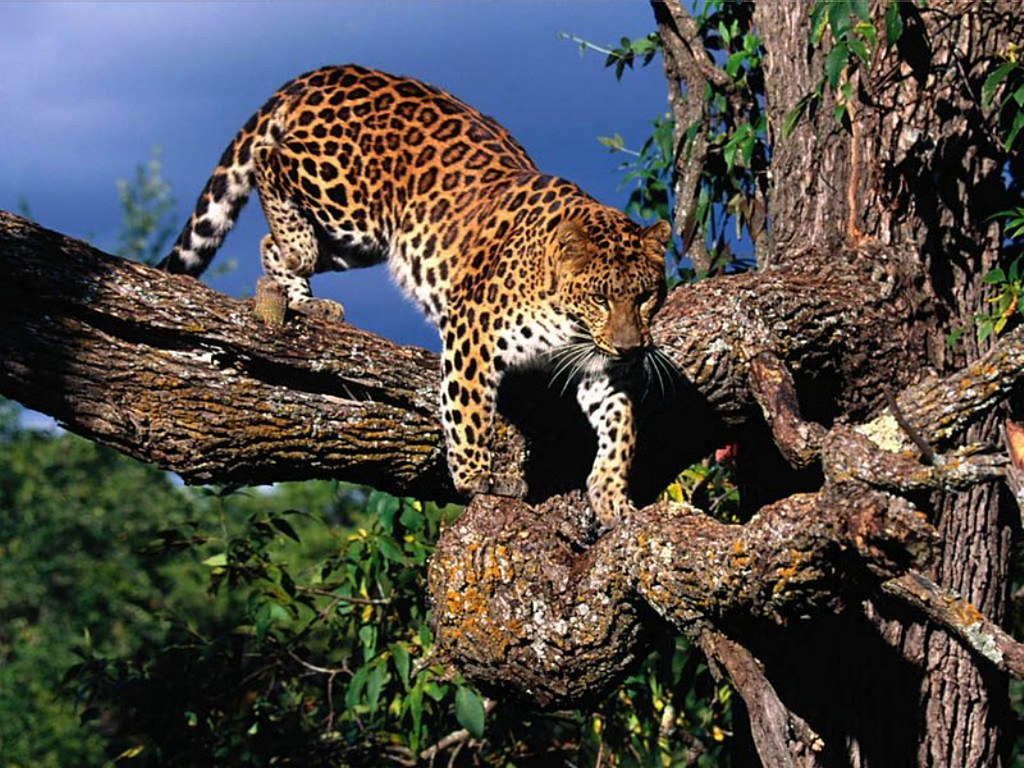 how the leopard got his spots short story