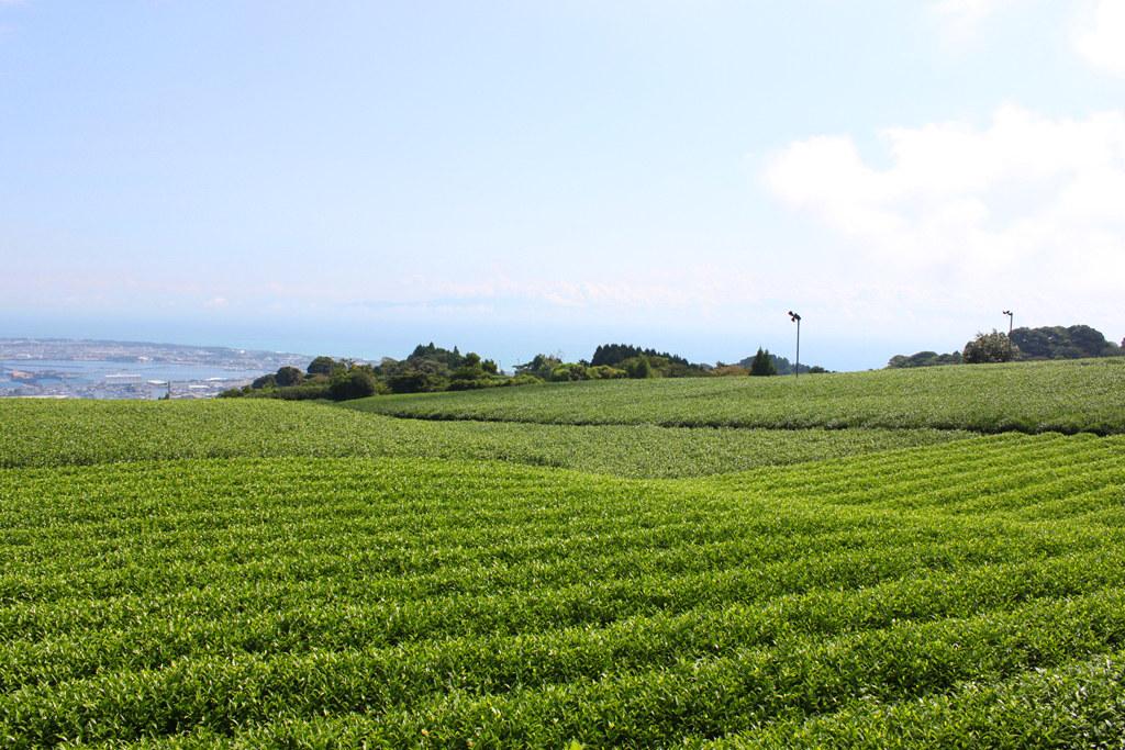 Shizuoka Guide (10)