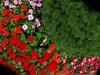Botanicheska gradina Balchik (syncho) Tags: flowers nature bulgaria balchik