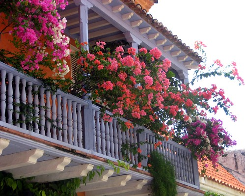 Balcony Flowers 1
