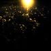 fuzz illuminated