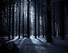 Wald HDR2-25 (Setekh81) Tags: schnee winter natur sw orte baum hdr rhön