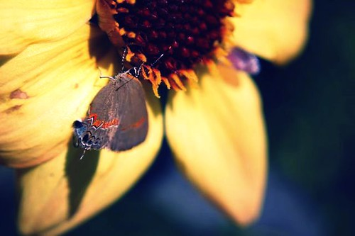 butterfly on petal