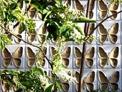 20070422_butterfly-clones - by lostmodern.net