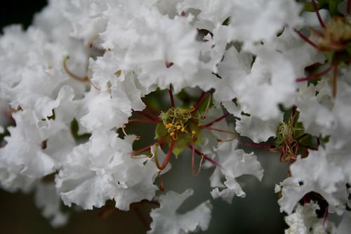 pollen — July 3