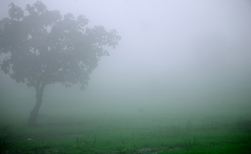 fog filter...