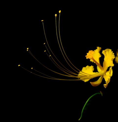 yellow stars...