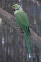 Parrot (Halans) Tags: bird parrot portmacquarie billabongkoalapark