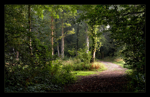 The woods at Kenley Surrey UK IMG_3062