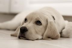 puppy seminar