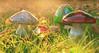 mushroom family (Shandi-lee) Tags: light red orange sun sunlight green fall grass leaves yellow mushrooms toadstools fallcolours dwcffcolorful