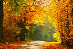 Through the Autumn Woodland (algo) Tags: road autumn light red orange sun sunlight green yellow gold interestingness topf50 topv333 bravo shadows searchthebest explore topv777 topf100 topf200 100f thechilterns 200f wendoverwoods coth chilternforest 50f explore50 thechilternhills anawesomeshot holidaysvacanzeurlaub theunforgettablepictures unforgettablepicture coth5