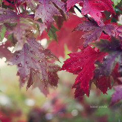 In love with life (Isabel Pava) Tags: red nature bokeh atumn leabes