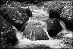 Kennall river (Simon Bone Photography) Tags: green nature river moss bigma mining valley flowing cwt sigma50500mm gunpowderworks kennallvale wwwthehidawaycouk cornwallwildlifetrust canoneos7d