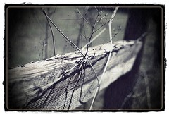 Barbed Weeds.. (Sailor 1) Tags: fence bokeh think wires fields posts nikonian explored i lumeier