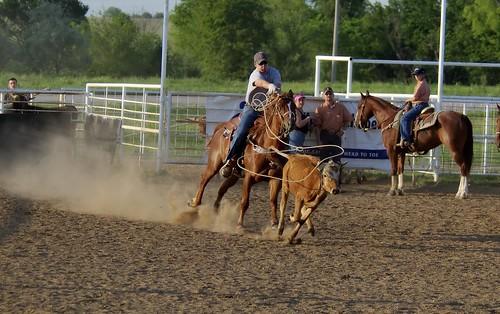 Calf Roping -- roping calf calfroping mustang rider oklahoma rodeo action