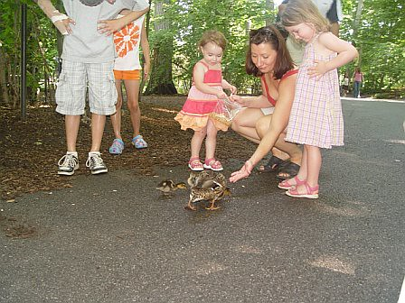 Feeding ducks at the Bronx zoo