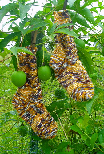 monkey tigers in the passion fruit