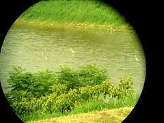 green water birds binocular business company taoyuan resevoir ocular