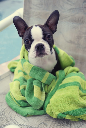 Cooper and his towel.