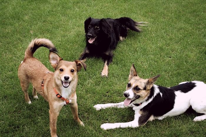 20100515 hundetriovintage01