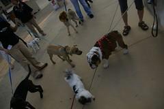 Plaza Pups (viewfromaloft/someonewalksinla) Tags: dogdayafternoon