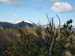 Mt. Daniel from Bootjack
