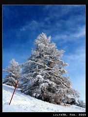 Harrowdown Hill (LilFr38) Tags: winter sky cloud mountain snow france tree montagne hiver ciel neige thomyorke nuage arbre canonef1740mmf4lusm ancelle hautesalpes champsaur digitalcameraclub harrowdownhill canoneos400drebelxti costebelle lilfr38 qualitypixels