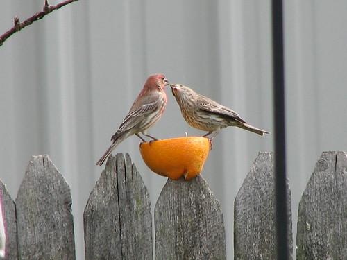 Feed me orange!