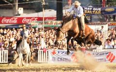 Y s, hay que saltar! (Eduardo Amorim) Tags: horses horse southamerica caballo uruguay cheval caballos cavalos prado montevideo pferde cavalli cavallo cavalo gauchos pferd hest hevonen chevaux gaucho  amricadosul montevidu hst uruguai gacho  amriquedusud  gachos  sudamrica suramrica amricadelsur  sdamerika jineteada   americadelsud gineteada  americameridionale semanacriolla semanacriolladelprado eduardoamorim iayayam yamaiay semanacriolladelprado2010