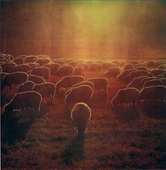 flock  (polaroid version) (Rhett Redelings) Tags: film polaroid sx70 bodie expired badscan autaut rhettredelings timezeroartistic