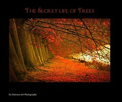 My first book ( Damona-Art ..`..`) Tags: wood trees light sun sunlight art fall nature colors playground rouge photography book landscapes lightandshadows nikon raw shadows seasons belgium belgique secret magic dream fantasy dreams mystical sunrays magical forests mystic enchanted rosita blurb fores d300 greatphotographers bookofsecrets colorphotoaward damona naturewatcher zauberwelt