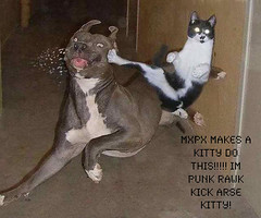 Funny Pictures of Cats and Kittens (alobasha2007) Tags: cats cat kitten feline photos kittens felines cutecats funnycats cutekitten cutekittens funnypictures catpictures babykittens picturesofcats funnycatpictures funnyanimalpictures picturesofkittenscats catpicturesbreeds cutekittenpictures