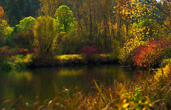 Fall on the Little Spokane River (Deby Dixon) Tags: park autumn trees reflection fall nature water river landscape photography washington nikon colorful spokane deby allrightsreserved 2010 cloudyday filteredlight paintedrocks naturephotographer littlespokaneriver leavesturningcolor debydixon debydixonphotography interestingfilteredlight