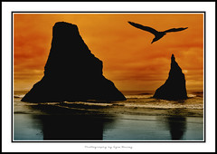 Oregon / Bandon / Sunset / Ocean / Orange / Waves / Water / Silhouette / Bird / Flying / Beach / Clouds / Kyle Bailey / Canon (Kyle Bailey - Da Big Cheeze) Tags: ocean sunset bird water silhouette oregon flying waves tide oregoncoast bandon borderfx kylebailey rookiephoto dabigcheeze wwwrookiephotocom