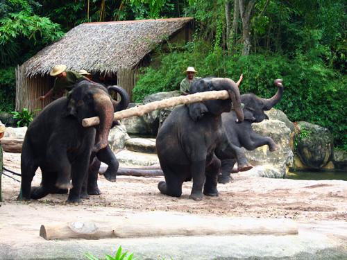 Elephant Finale Show