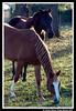 Cavalos ! (crenan) Tags: santa horse me rio d50 grande interesting nikon do calendar photos maria fast explore santamaria cavalos score cavallo cavalo sul blueribbonwinner ufsm d80 scoremefast câmeradeourobrasil crenan grupo1a10brasil visãofotográfica carlosrenanpiressantos