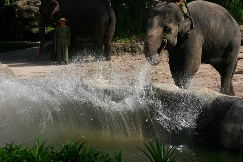 Elephant show in Singapore Zoo.