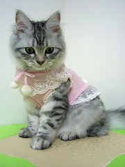EPSN5056_1 (jacky elin) Tags: cats cat kittens clothes wei