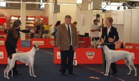 Greyhounds BOB