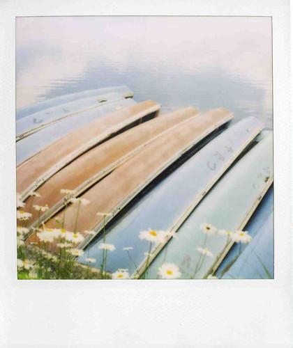 daisy boats
