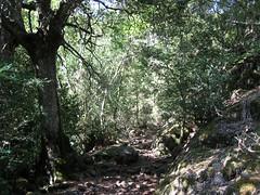 La trace cairnée vers Pittinaghja