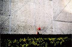 la felicidad (mandarinaAsesina) Tags: teatro rojo nia felicidad praktica analogica globo corriendo seto casualidad felicitatsp