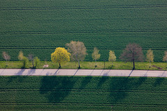 Bavarian Alley (Aerial Photography) Tags: trees tree verde green by graphicart landscape spring graphics mood grafik row aerial line birch grn landschaft bume baum deu stimmung frhling birke luftbild alignment luftaufnahme ebe obb bayernbavaria deutschlandgermany reihe laubbaum landsham pliening fotoklausleidorfwwwleidorfde 23042010 1ds42379 gerharding plieninglkrebersberg