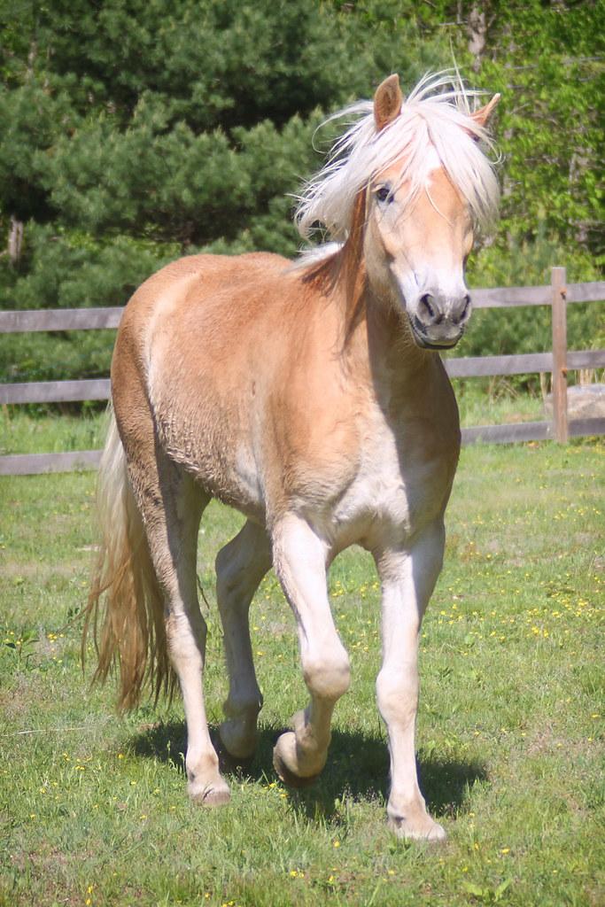 horses 236x